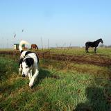 Joop's Dog Log - Monday Mar 22