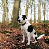 Joop's Dog Log - Tuesday Mar 23