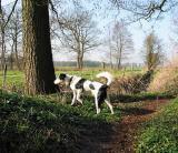 Joop's Dog Log - Thursday Mar 25