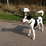Joop's Dog Log - Monday Apr 05