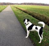 Joop's Dog Log - Wednesday Apr 07
