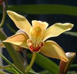 IMG_3599 flowers.jpg