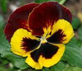 IMG_3920 flowers.jpg