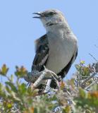IMG_4223 birds.jpg
