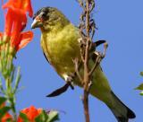 IMG_4576 birds.jpg