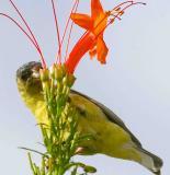 IMG_4590 birds.jpg
