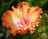 IMG_4620 flowers.jpg