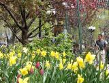 Union Square Spring
