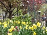 Spring in Union Square Park