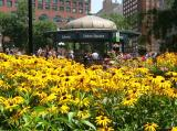 Summer Black-eyed Susans at Union Square