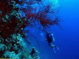 Diver at the Woodhouse Reef