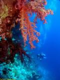 Divers at the Woodhouse Reef