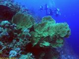 Divers and fan corals  at the Thomas Reef