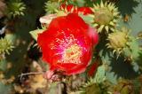 Desert Flowers 2004