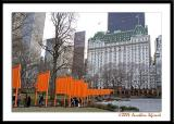 My Perspective of Christo and Jeanne-Claude's The Gates in Central Park