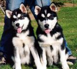 Twins(Photo courtesy Jane Palinkas)