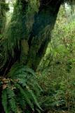 040925 Tree Fern