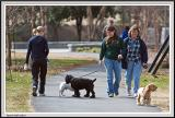 Walking the Dogs - IMG_1847.jpg