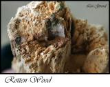 Rotten Wood - Sept. 26-04