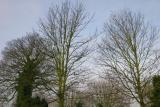 Cemetary Trees