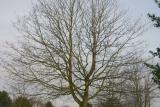Cemetary Tree