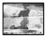 Tiretracks and Footprints