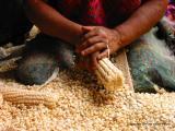 grinding corn, santa maria de jesus, guatemala