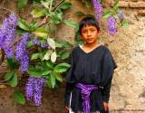 wilbur with purple flowers, antigua, guatemala
