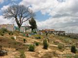 tree in cemetery, santiago sacatepequez, guatemala