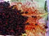 blackberries, santiago atitlan
