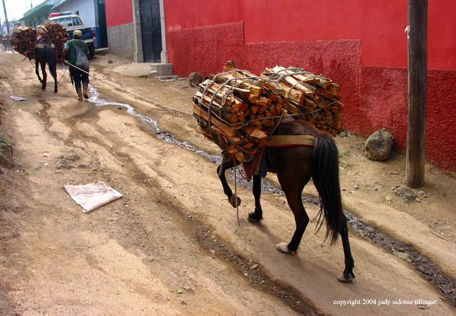 donkeys, santa maria de jesus, guatemala
