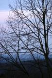 Viella Tree