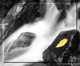 Mountain Stream BW cropped.jpg