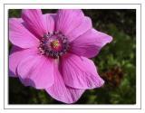 Deep pink flower 2013)