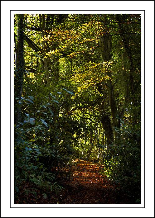 Stourhead ~ sunlit path