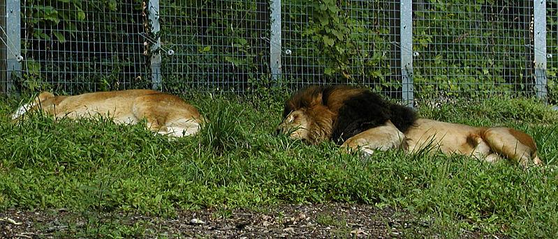 Cats nap.jpg(334)