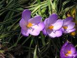 770 Chippewa Spring 2004 Garden