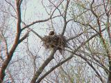 Eagle Nest - 3-27-04  KY