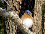 Bluebird 12-26-04