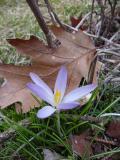 upstate_ny_spring_02