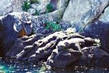 Rock Sculptures, Lake Taupo