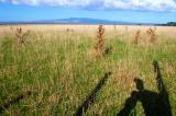 Lake Wairarapa landscape