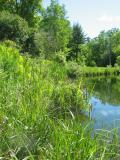Echo Pond in Early Summer