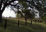 Pasture and vineyard
