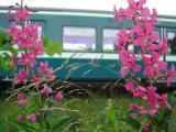 Flowertrain