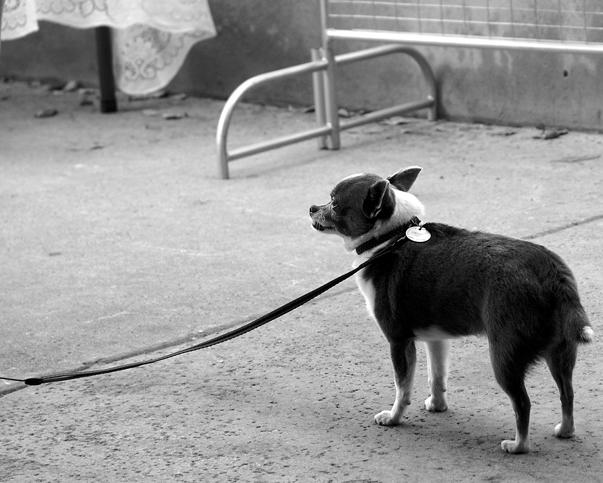 mandatory photo of small dog