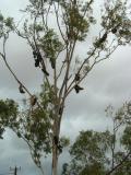 Curious Shoe Tree