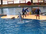 Dolphins6.jpg