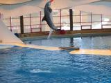 Dolphins8.jpg