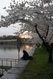 Guy with Cherry Blossoms.jpg